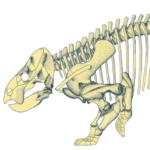 Lisowicia szkielet (1)